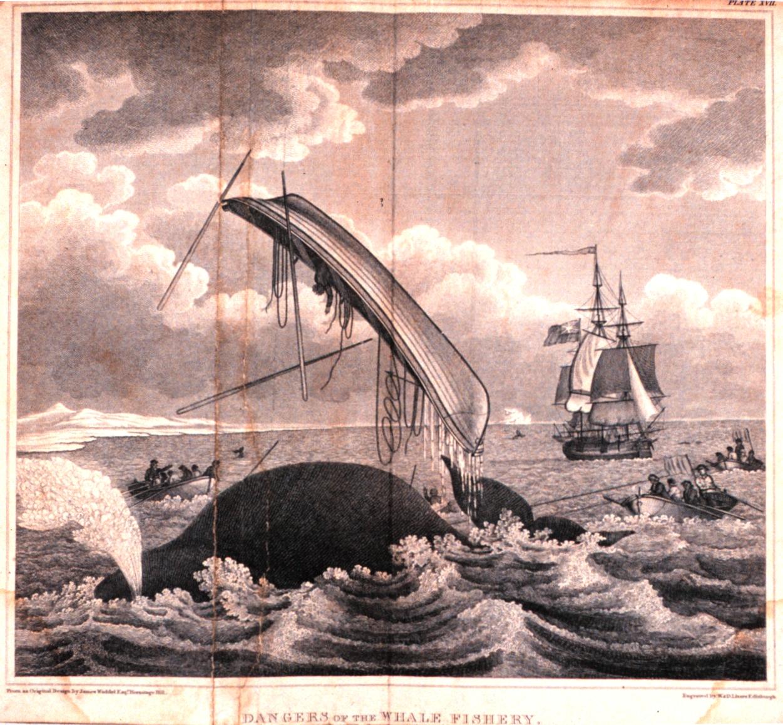 Pelagic Whaling