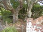 Old Diver Grave