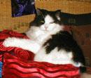 Leon the Cat